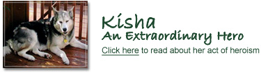 Kisha, an Extraordinary Hero